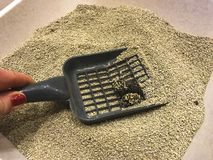 Plastic toilet shovel for cats. royalty free stock photography