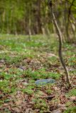 Plastic trash in the forest. Tucked nature. Plastic container lying in the grass.  royalty free stock photography