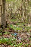 Plastic trash in the forest. Tucked nature. Plastic container lying in the grass.  stock photo