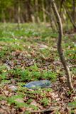 Plastic trash in the forest. Tucked nature. Plastic container lying in the grass.  royalty free stock photo