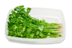 Plastic tray with coriander Royalty Free Stock Photography