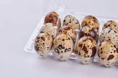 Plastic tray with quail eggs. Stock Photography