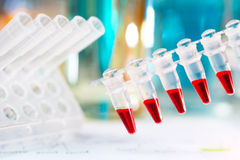 Plastic tubes prepared for amplification of DNA Stock Image