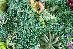 Plastic tuin Royalty-vrije Stock Foto