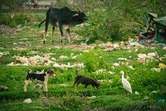 Plastic verontreiniging tijdens dieren stock foto