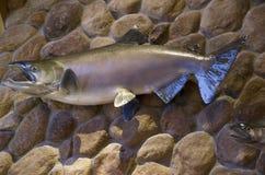 Plastic vissen op muurart. Stock Fotografie