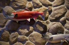 Plastic vissen op muurart. Stock Afbeeldingen