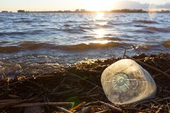 Plastic water bottles pollute ocean. Bottle on the cost royalty free stock photo
