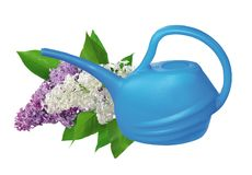 Plastic watering can and lilac isolated on white Stock Image