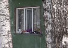 Plastic window in the old panel house with pigeons on the windowsill, birch trunks in front of the wall of the house. royalty free stock photo