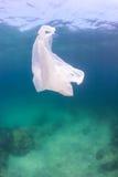 Plastic zak op een koraalrif Stock Afbeelding