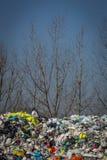Plastic zakken in het hout Stock Foto
