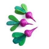 Plasticine cute Beets. Stock Image