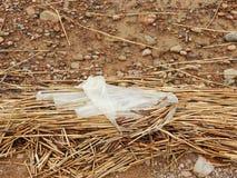 Plastik auf dem Strand lizenzfreie stockbilder