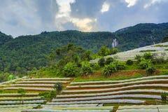 Plastik- Deckungs-Ackerland in Nord-Thailand Stockbilder