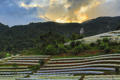 Plastik- Deckungs-Ackerland in Nord-Thailand Stockfotos