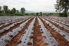Plastikabdeckungsboden, der die Anlage landwirtschaftlich auf Sonnenlicht pflanzt stockbilder