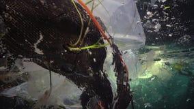 Plastikabfall und anderer Rückstand, die unter Wasser schwimmt Und tote Fische Plastikrückstand im Wasser, wild lebende Tiere töt stock footage