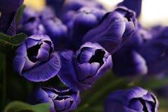 Plastikblumen im Blumenfestival Stockbild