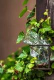 Plastikflasche in den Blättern des Efeus Lizenzfreie Stockbilder