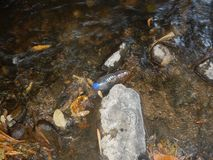 Plastikflasche, die auf das Wasser schwimmt stockfotos