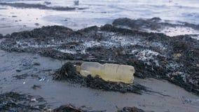 Plastikflasche und Meerespflanzen auf dem Sandstrand an der Küste stock video