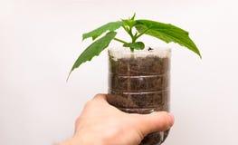 Plastikglas mit Jungpflanze in der Hand auf weißem Hintergrund Lizenzfreie Stockfotos