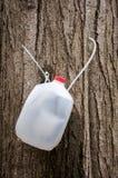 Plastikkrug und Schläuche, zum des Ahornbaums für Saft zu klopfen Stockfotos