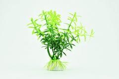 Plastikmeerespflanze auf weißem Hintergrund Stockfotos