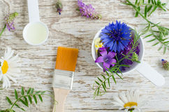 Plastikowa miarka z różnorodnymi pole kwiatami i kosmetyk szczotkujemy Składniki naturalny kosmetyk Fotografia Royalty Free