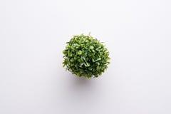 Plastikowa roślina Fotografia Royalty Free