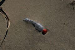 Plastikowej butelki denny zanieczyszczenie na piaskowatej plaży obraz stock