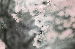 Plastikowi kwiaty za nadokiennym szkłem padają Obraz Stock