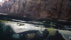 Plastikowy śmieciarski i inny gruzów unosić się podwodny Morski zanieczyszczenie Plastikowi gruzy w wodzie, zabija przyrody zbiory