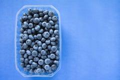 Plastikowy pudełko pełno czarne jagody na błękitnym tle Obraz Stock