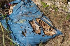 Plastikowy worek porzucający obrazy stock