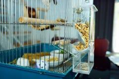 Plastikvogelzufuhr Lizenzfreie Stockfotografie