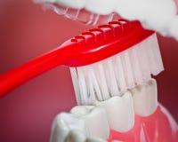Plastikzähne und Gummimodell und eine Zahnbürste Stockbild