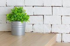 Plastique de plante verte dans le petit pot avec le backgroun blanc de mur de briques Images libres de droits