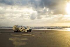 Plastique de sable de plage de pollution photo stock