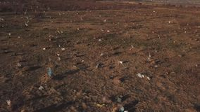 Plastpåsar på gräsmattan arkivfilmer