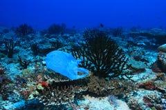 Plastpåse på koraller royaltyfri bild