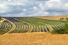 Platå de Valensole (Provence), lavendel Arkivfoto