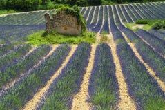 Platå de Valensole (Provence), lavendel Royaltyfri Foto