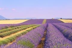 Platå Valensole, Provence: lavendelfält arkivbilder