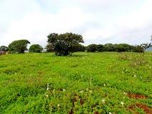 Platô de Kaas - vale das flores no Maharashtra, Índia Imagens de Stock