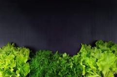 Plat-configuration des groupes de diverses herbes vertes fraîches de cuisine parsle Image libre de droits