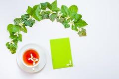 Plat-configuration horizontale avec un modèle des feuilles et du whi frais de vert de lierre Photo stock