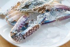 Plat de crabe avec de la glace Photo libre de droits