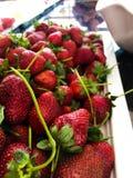 Plat de fraise images stock